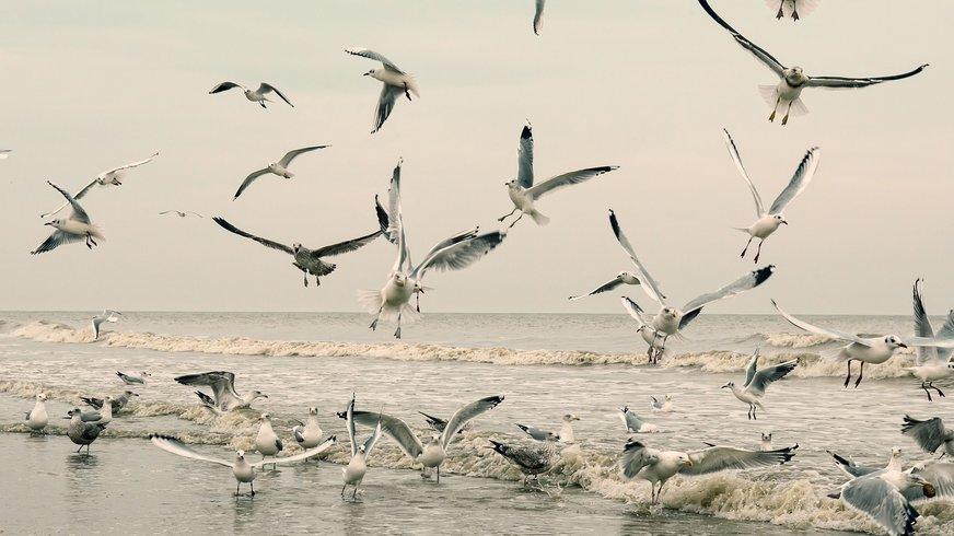 Schwarm Möwen fliegt am Strand