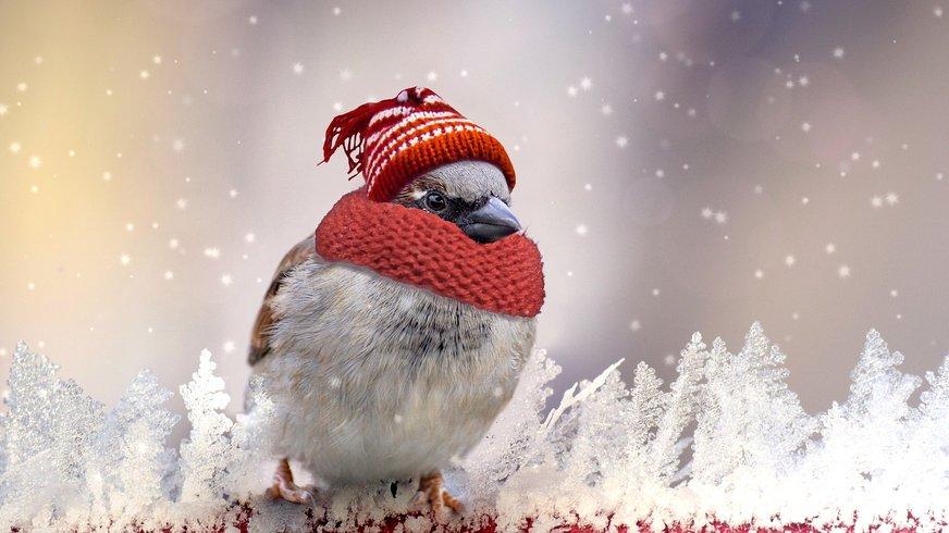 Spatz im Winter mit Schal und Mütze